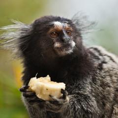 """Macacos de Laboratório – """"Aqui, é Assim Que as Coisas São Feitas"""""""